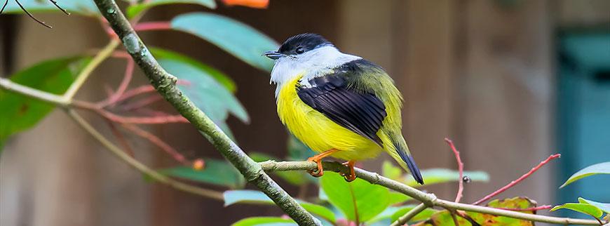 birdingespecialbg