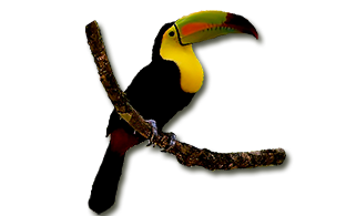 Birdwatching Belize<br /> Belize - Birding Tours