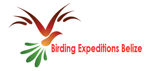 Birding Expeditions Belize
