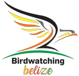Birding Expeditions Belize