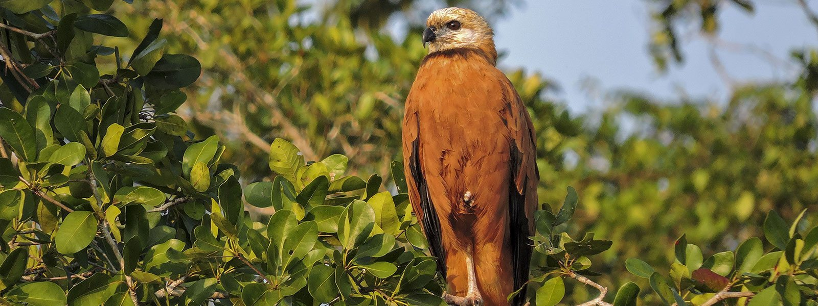 Birdwatching Northern Belize