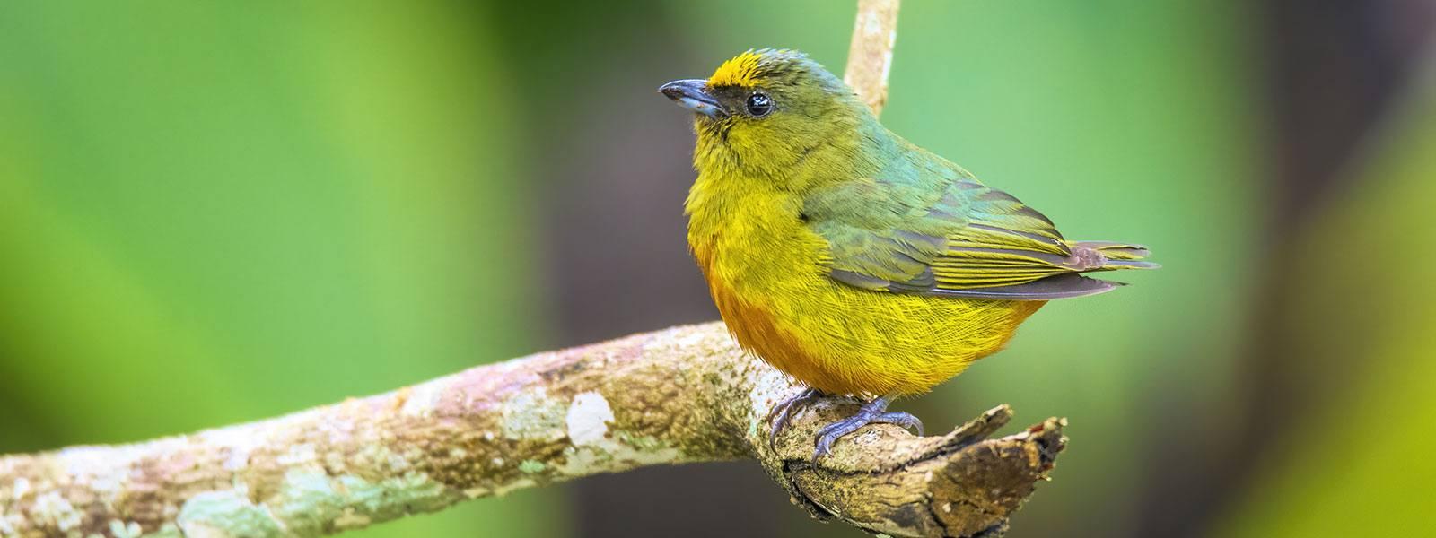 Belize Reef & Rainforest Birding Tour