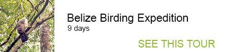 Belize Birding Expedition