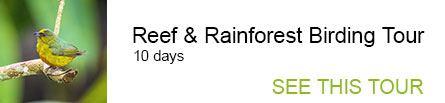 Reef & Rainforest Birding Tour
